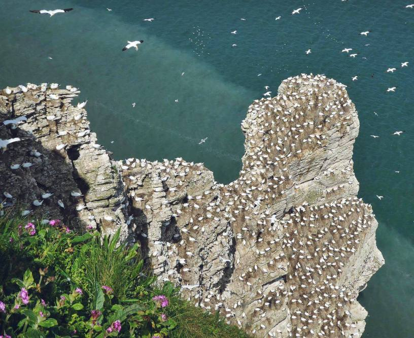 Around 200,000 breading seabirds are though to return for summer.
